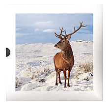 Buy Darkroom Stag And Pheasant Christmas Cards, Box of 16 Online at johnlewis.com