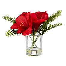 Buy John Lewis Ruskin House Amaryllis & Pine Bunch Online at johnlewis.com
