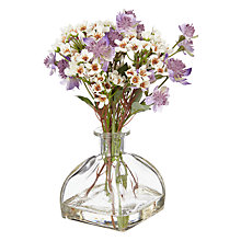 Buy Peony Purple Astranthia in Diffuser Vase Online at johnlewis.com
