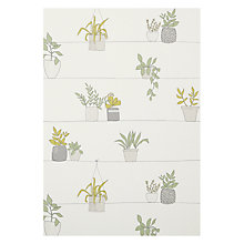 Buy John Lewis Pot Plants Wallpaper, Fennel Online at johnlewis.com