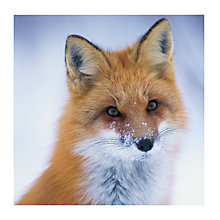 Buy Almanac Friendly Fox Charity Christmas Cards, Pack of 8 Online at johnlewis.com