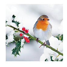 Buy Medici Robin And Holly Charity Christmas Cards, Pack of 8 Online at johnlewis.com