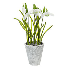 Buy John Lewis Snowshill Potted Snowdrops, H25cm Online at johnlewis.com