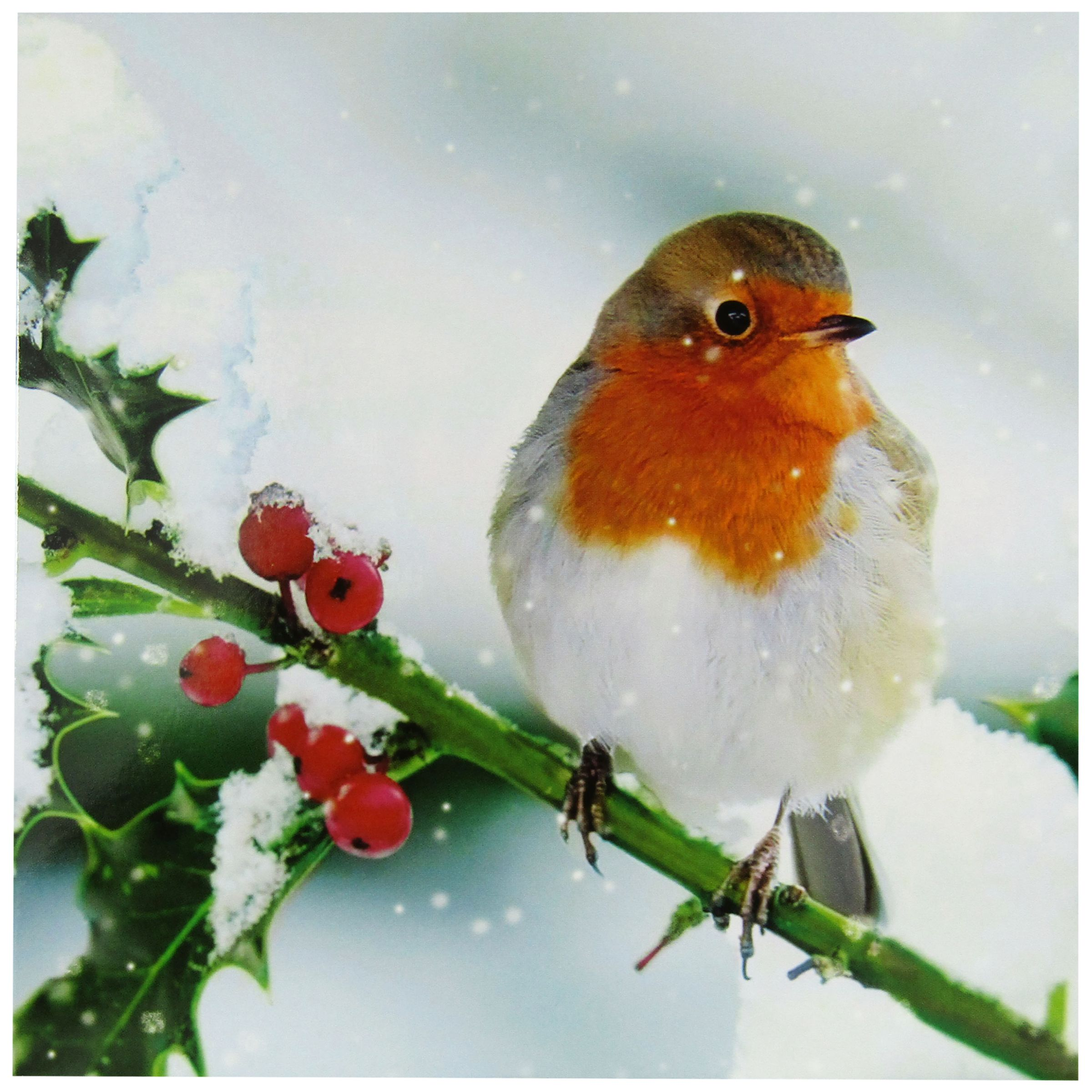 Woodmansterne Woodmansterne Winter Perch Charity Christmas Cards, Pack of 5
