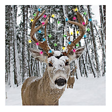Buy Almanac Snow Deer Charity Christmas Cards, Pack of 8 Online at johnlewis.com