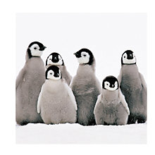 Buy Almanac Penguin Huddle Charity Christmas Cards, Pack of 8 Online at johnlewis.com