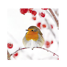 Buy Almanac Robin On A Branch Charity Christmas Cards, Pack of 8 Online at johnlewis.com