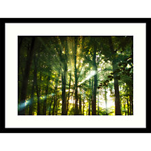 Buy Paul Sanders - Eridge Woods Framed Print, 84 x 64cm Online at johnlewis.com