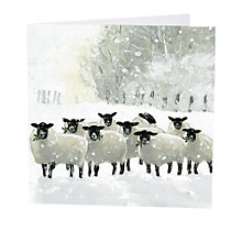 Buy Art Marketing Shepherds Watch Charity Christmas Cards, Pack of 6 Online at johnlewis.com
