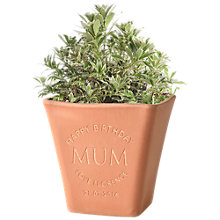 Buy Letterfest Engraved Message Terracotta Pot Online at johnlewis.com