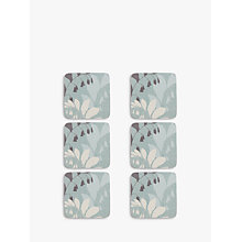 Buy John Lewis Garden Coaster, Set of 6 Online at johnlewis.com