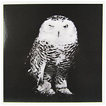 Buy Woodmansterne Black And White Owl Greeting Card Online at johnlewis.com