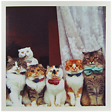 Buy Woodmansterne Party Cats Greeting Card Online at johnlewis.com