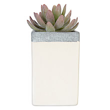 Buy John Lewis Fusion Lotus Succulent in Large Square Pot, 16cm Online at johnlewis.com