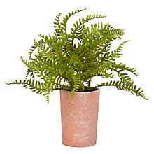 Buy John Lewis Fusion Fern in Plant Pot, 18cm Online at johnlewis.com