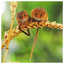 Buy Paperhouse Harvest Mice Greeting Card Online at johnlewis.com