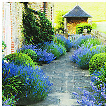 Buy Paperhouse Lavender Path Greeting Card Online at johnlewis.com