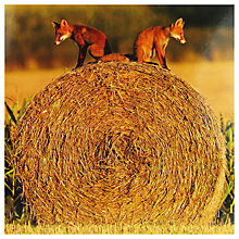 Buy Paperhouse Fox Cubs On Hay Greeting Card Online at johnlewis.com