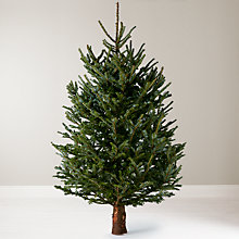 Buy John Lewis Real 6ft Fraser Fir Christmas Tree, No Stand Online at johnlewis.com