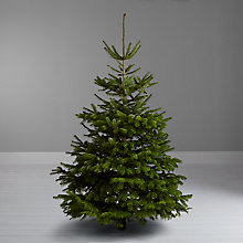 Buy John Lewis Real 7ft Nordman Fir Christmas Tree, No Stand Online at johnlewis.com