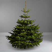 Buy John Lewis Real 5ft Nordman Fir Christmas Tree, No Stand Online at johnlewis.com