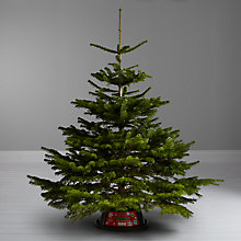 Buy John Lewis Real 6ft Nordman Fir Christmas Tree, With Stand Online at johnlewis.com