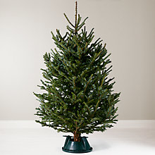 Buy John Lewis Real 6ft Fraser Fir Christmas Tree, With Stand Online at johnlewis.com