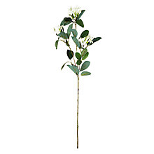 Buy Floralsilk Stephanotis Online at johnlewis.com