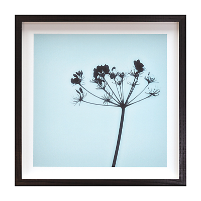 Deborah Schenck – Cow Parsley Framed Print, 38 x 38cm
