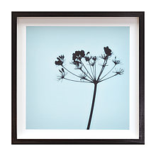 Buy Deborah Schenck - Cow Parsley Framed Print, 38 x 38cm Online at johnlewis.com