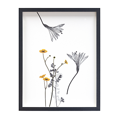 Claire Brooker – Buttercup Botanical Collage Framed Print, 43 x 34cm