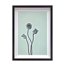 Buy Deborah Schenck - Cedar Croft Poppy Framed Print, 42 x 31cm Online at johnlewis.com