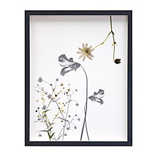 Buy Claire Brooker - Viola Botanical Collage Framed Print, 43 x 34cm Online at johnlewis.com