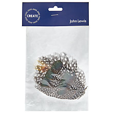 Buy John Lewis Create Guinea Fowl Feather Online at johnlewis.com