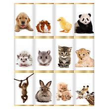 Buy House of Dorchester Cute Animal Milk Chocolate Slims, 120g Online at johnlewis.com