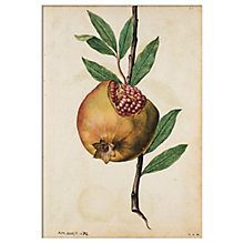 Buy V&A - Pomegranate Unframed Print, 30 x 40cm Online at johnlewis.com