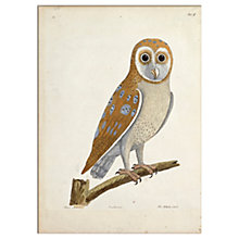 Buy V&A - The White Owl Print, 30 x 40cm Online at johnlewis.com