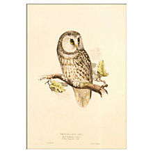 Buy V&A - Tengmalms Owl Unframed Print, 30 x 40cm Online at johnlewis.com