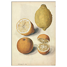 Buy V&A - Lemons Unframed Print, 30 x 40cm Online at johnlewis.com