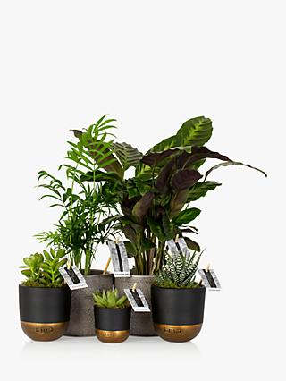 The Little Botanical New Home Bundle