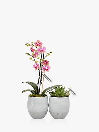 The Little Botanical Orchid & Succulent Duo