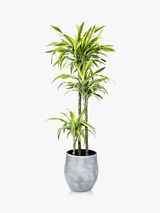 The Little Botanical Extra Large Lemon Dracaena Ceramic Pot Plant
