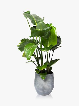 The Little Botanical Extra Large Strelitzia Ceramic Pot Plant