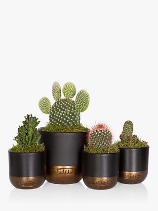 The Little Botanical Cactus Plant Family