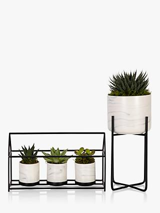 The Little Botanical Succulent House Plant & Marble Planter