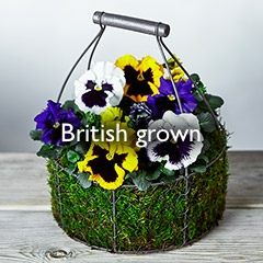 British grown
