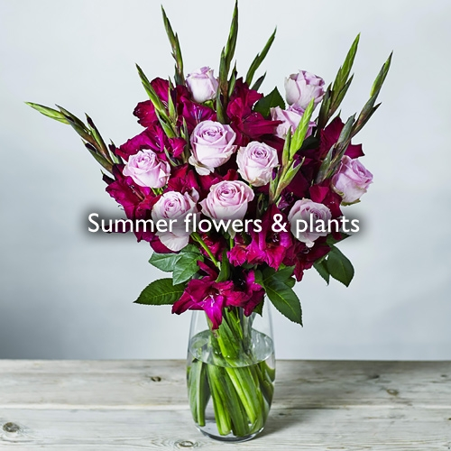 Summer flowers and plants