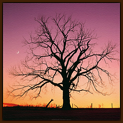 P Mueller – Arboreal Afterglow