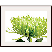 Buy Jenny Kraft - Green Chrysanthemum Online at johnlewis.com
