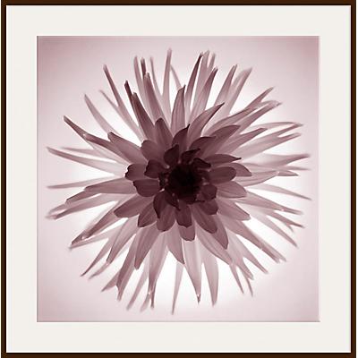 Gill Copeland - Translucent Flower Print